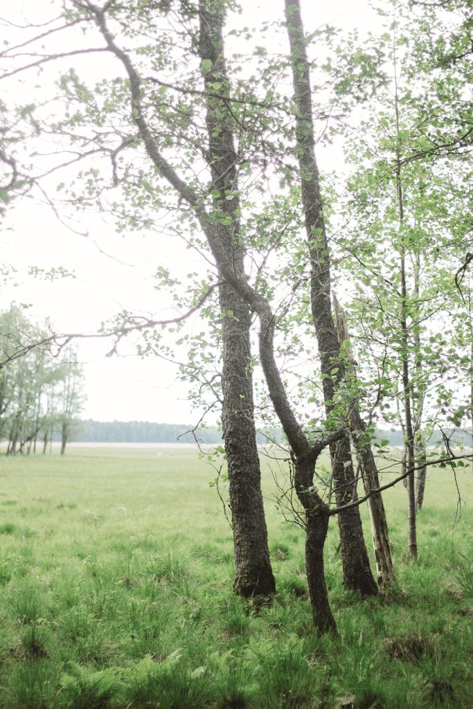 Greenplanetastronatus-luonto-puut
